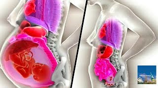 Pregnancy Process Until Birth : Growing pains : Pregnancy's impact : Pregnancy Process Video