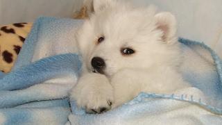 Snow | Childhood dog tribute