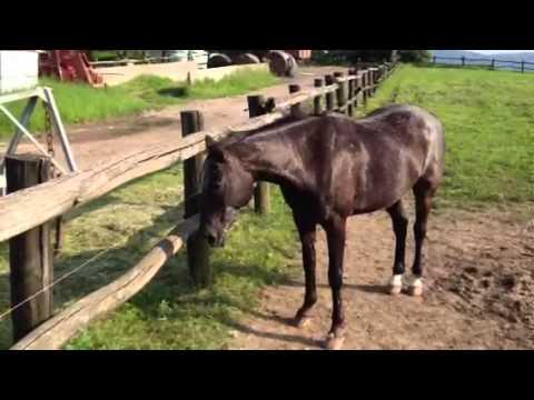 Il cavallo che dice sempre di sì
