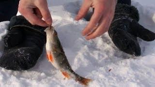 Окунь ловля зимой на мормышку