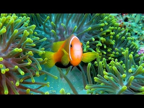 Tauchen im Süd Male Atoll mit Aeolus Dive, Süd-Male-Atoll,Malediven