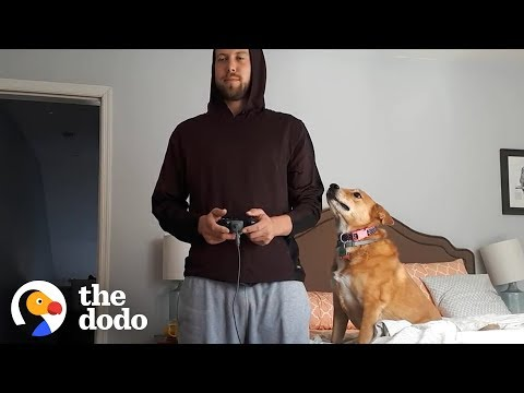 Dog Won't Let Owner Play Video Games