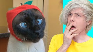 TIK-TOK TRY NOT TO LAUGH CHALLENGE (FUNNY VIDEOS OF ANIMALS AND FAIL COMPILATION)