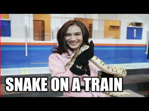 Video: Pandemonium erupts as passengers find huge python in a moving train