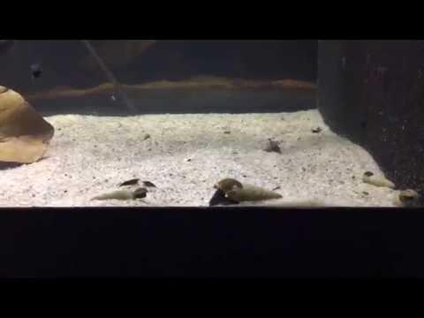 Pati na ang mga worm ay matatagpuan pagkatapos supplementation