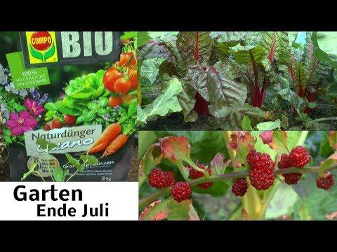 Garten Ende Juli Düngen mit Guano