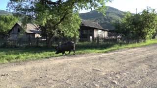 Алтайский край, Путешествие 2015, Часть 02