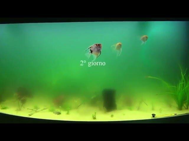 Eliminazione alghe unicellulari con lampada sterilizzatrice UV
