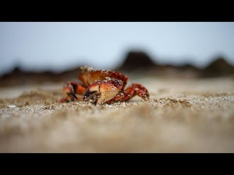טיול מחנאות באיים של ונקובר - מקסים!