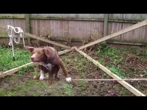 Пёс акробат