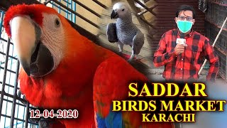 Exotic birds Colorful Rare Scarlet macaw Cockatoo Grey  at Saddar Market 12-4-2 Video In Urdu/Hindi
