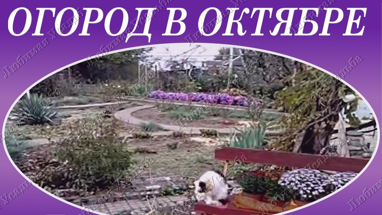 Работы на огороде в октябре   Сад и огород в октябре