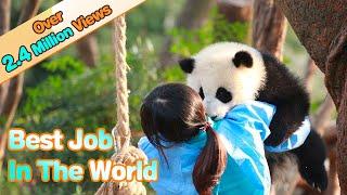 I'm So Jealous Of Panda Nannies | iPanda