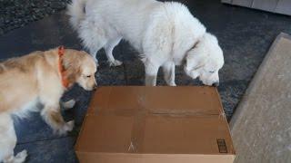 Koda Gets a Big Delivery! (Super Cooper Sunday #96)
