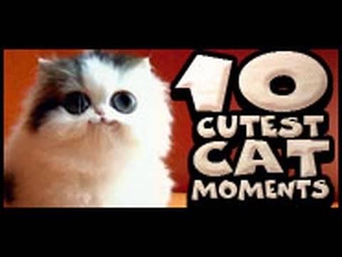 The Top Ten Cutest Cat Moments!