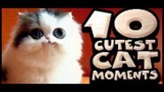 Десятка самых весёлых видео с кошками
