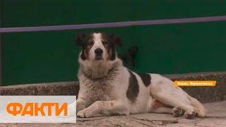 Бездомные животные в Украине: как бороться и пример Польши