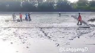 preview picture of video 'Panen udang ditambak | Pt.wahyuni mandira'