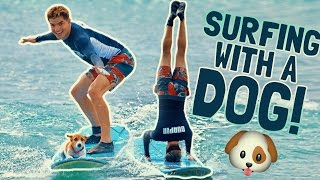 SURFING WITH A PUPPY!