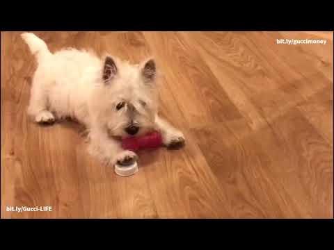 Гучи и игрушки