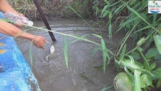 68 | Thả Câu Cá Trê Bằng Chai Nhựa | Fishing