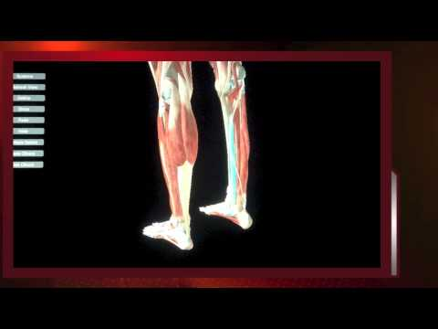 Video How to Diagnose and Treat SHIN SPLINT PAIN video by Spine & Sports Chiropractic