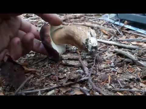 Trattamento di fungo di piede di caffè