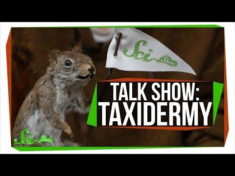 Learn To Taxidermy   SciShow Talk Show