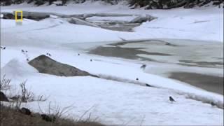 Thế giới động vật - Ở thung lũng của chó sói