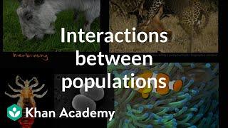 Interactions Between Populations    Ecology   Khan Academy