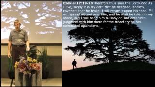 The Eagles, the Vine and the Cedar - Ezekiel 17:1-24