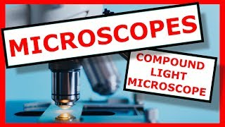 The Parts of a Compound Light Microscope