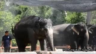 Menarik Di Temerloh - Pusat Konservasi Kuala Gandah