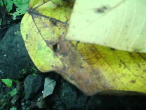 Kung paano upang linisin ang iyong katawan ng mga parasito herbs