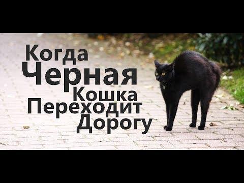 Когда Черная Кошка Переходит Дорогу