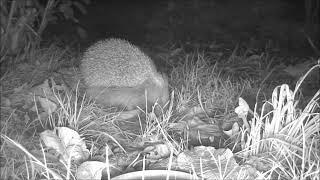 Wildlife Trail Camera - 18.10.2019
