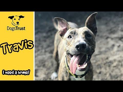 Meet Travis! | Dogs Trust Ilfracombe