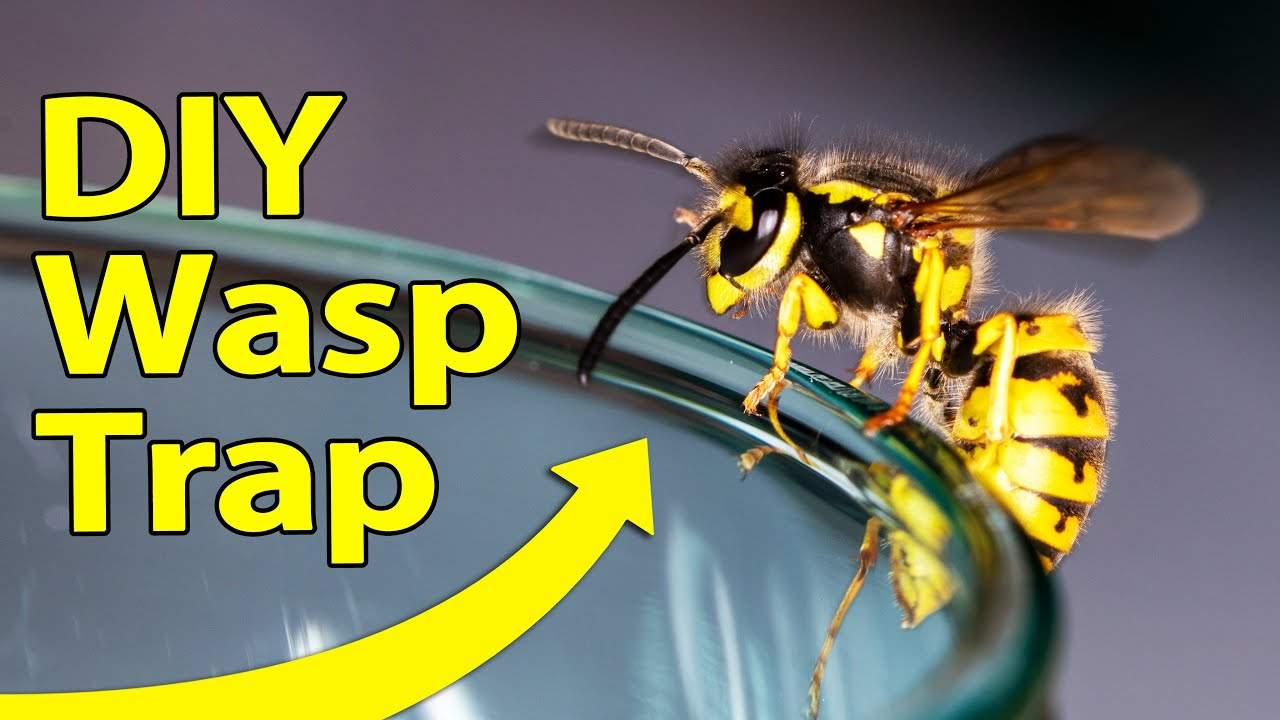 How to Make a Simple Wasp Trap thumbnail