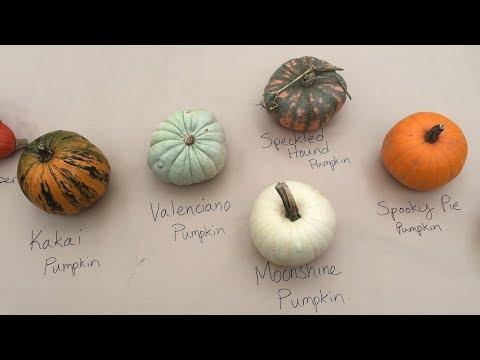 , title : 'Pumpkin, Squash and Gourd Varieties