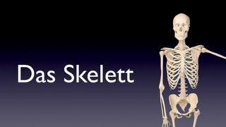 Gambar cover Das Skelett