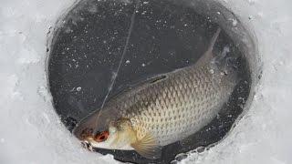 Зимняя рыбалка рыбинское водохранилище борок