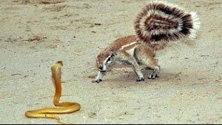 11 WEIRD Animal Attacks