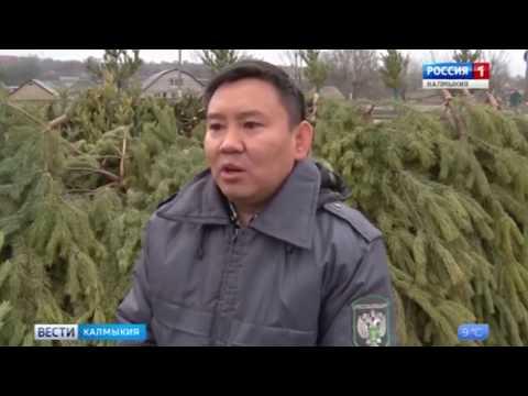 В Республике Калмыкия Управлением Россельхознадзора выявлены фальсифицированные карантинные сертификаты