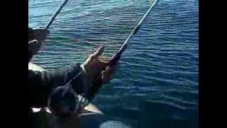 preview picture of video 'pesca de salmones  necochea argentina'