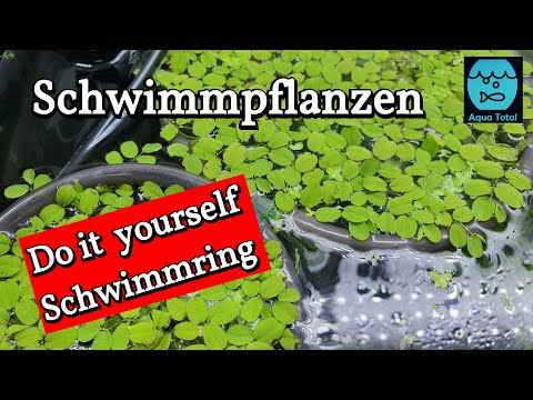 So hast du deine Schwimmpflanzen im Griff- DIY Schwimmring für Aquarium Schwimmpflanzen selber bauen