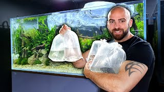 NEW FISH ADDED To 4ft ANGELFISH AQUARIUM | MD FISH TANKS