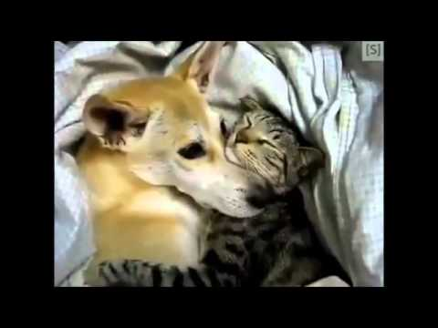 Getting Along Like...Cats and Dogs?