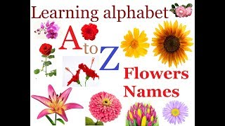 Flowers Names For Children In English म फ त ऑनल इन