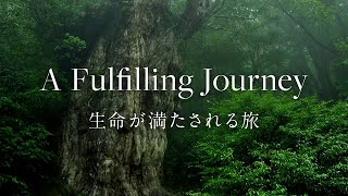 [Yakushima] [4K/Commercial] A Fulfilling Journey | 生命が満たされる旅