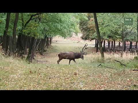Hunting Czech Republic